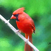 A portrait of a male cardinal perching on a limb.