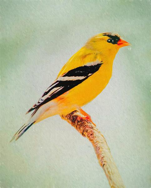 A Gold Finch,autumn colors