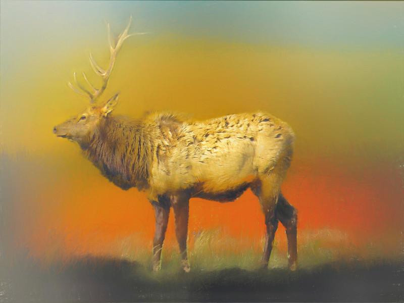 Pennsylvania Bull Elk