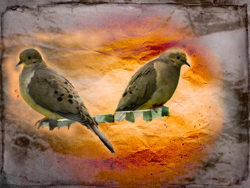 A Pair of Mourning Doves