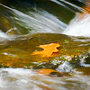 Orange Leaf on flowing water.