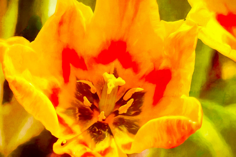 A single red and yellow tulip.