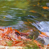 Rushing water and autumn leaves.