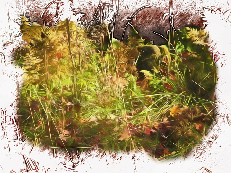 A fall still life of ferns,grass and leaves.