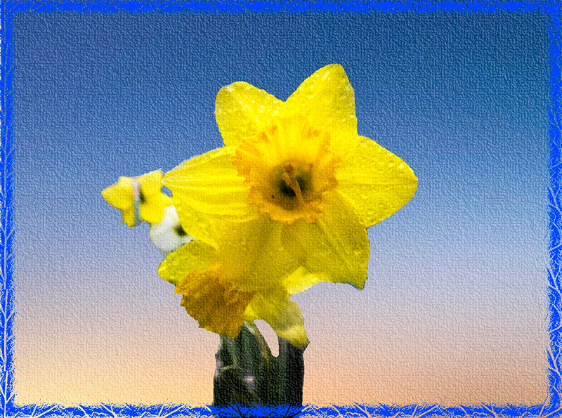 Yellow daffodil on canvas