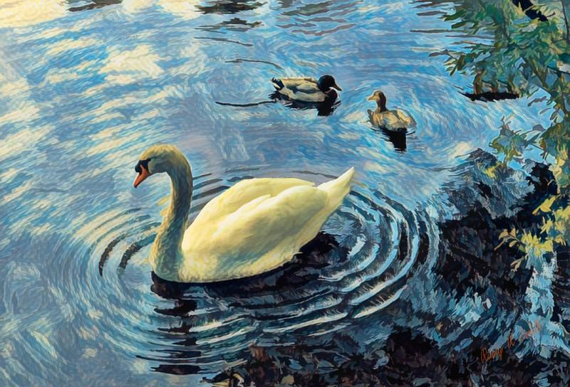 Mute swan and mallard ducks.