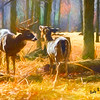 Digital painting of Whitetailed deer pair standing together.