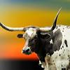 Art portrait of a Longhorn Steer.