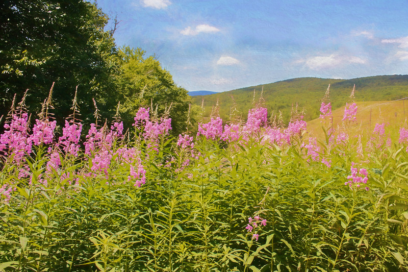 A digital art photo  rolling hills with pink flowers in the foreground.