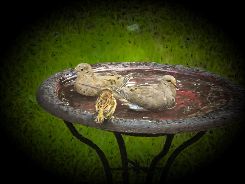 Two Mourning Doves in bird bath,house sparrow is watching.