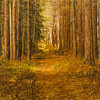 Trail thru the pines