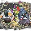Duck stilllife
