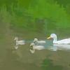 White duck three ducklings.