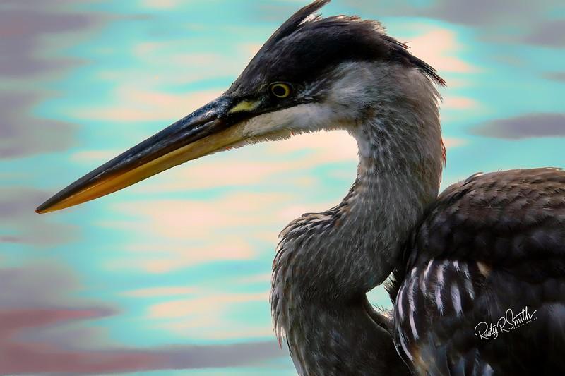 Very close Art photograph of a blue heron.