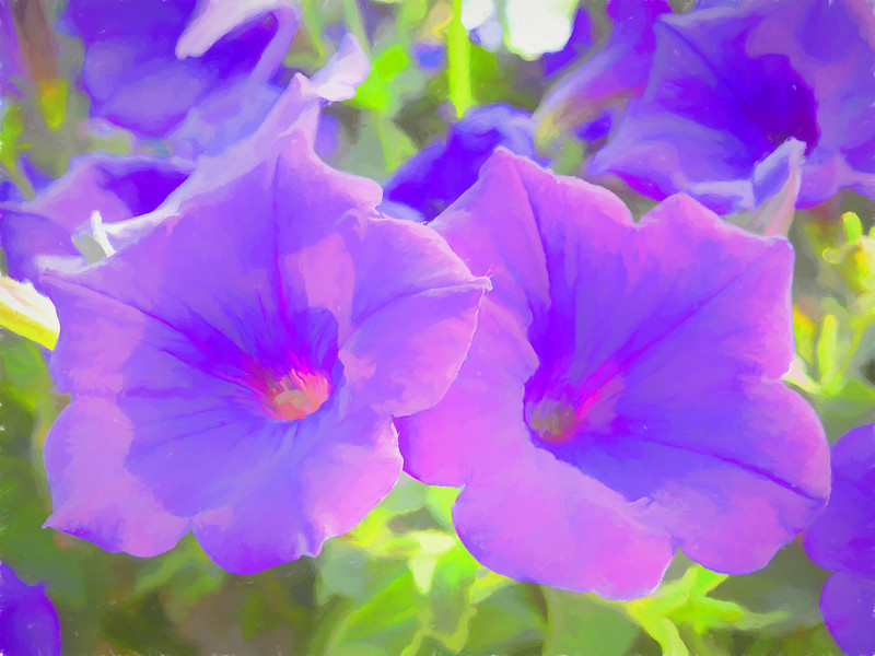 Soft rendition of two purple petunias