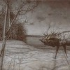 A black and white composite art photograph of a Bull Elk on icy pond.