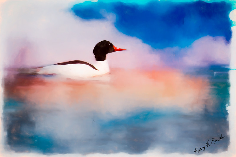 Duck dreaming