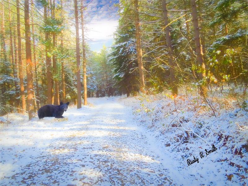 Composite art photograph,black bear in snowy forest scene.