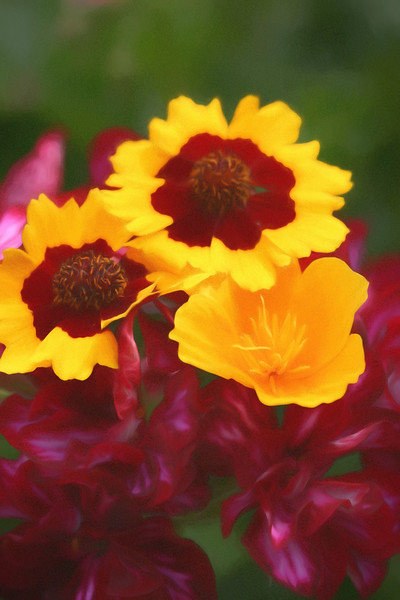 An artist view of yellow & red flowers