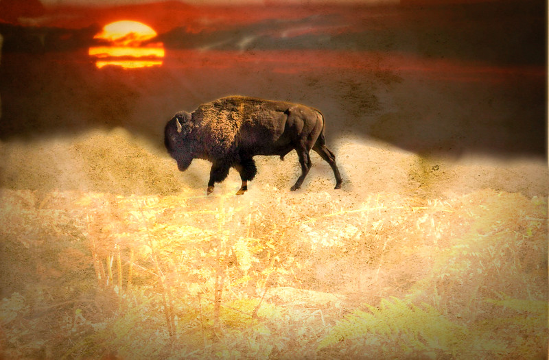 The Spirit Buffalo