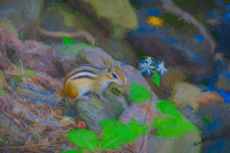 Art photograph of eastern chipmonk.