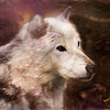 Wolf eyes.