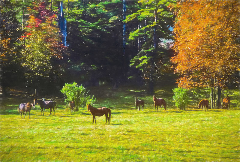 A digital art photograph of  a group of morgan horses standing in a scenic fall pasture.