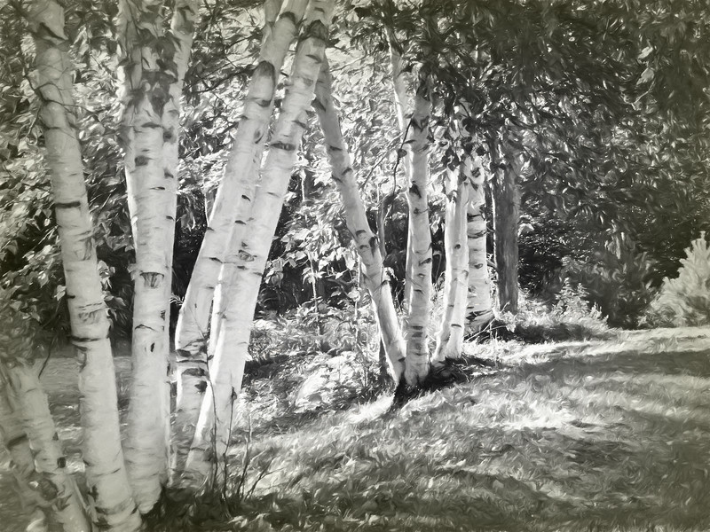 A black and white Digital art photograph of A group of white birch trees