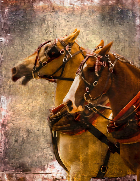 Two Draft horses with harness