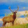 A large bull elk