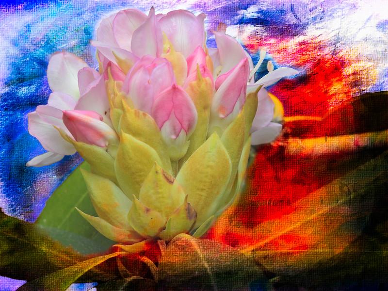 wild Rhododendron