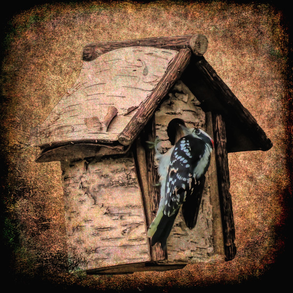 Woodpecker clinging to bird house