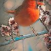 cardinal on branch.