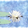Water Lilly artised