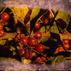 A digital art photograph of a cluster of autumn olive berries.