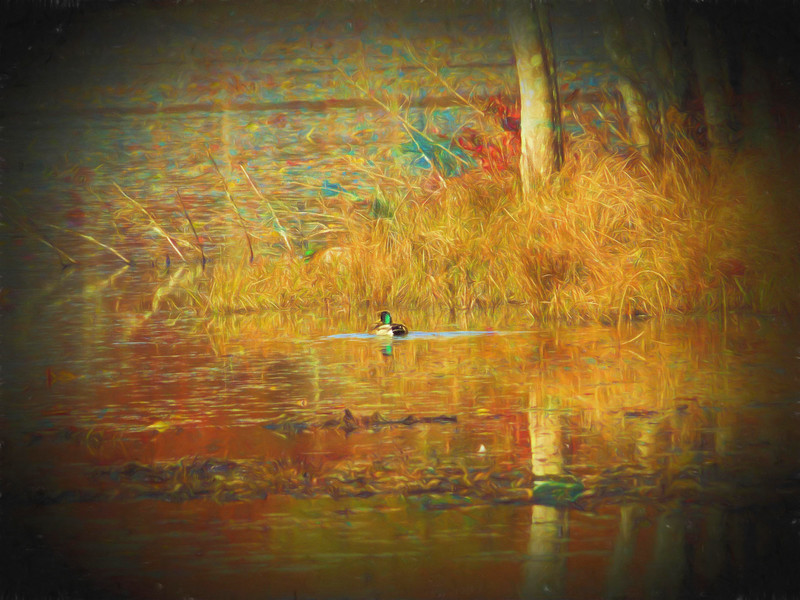 A lone mallard duck floating in the fall colors.