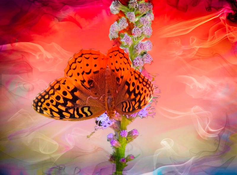 A Fritillary butterfly.