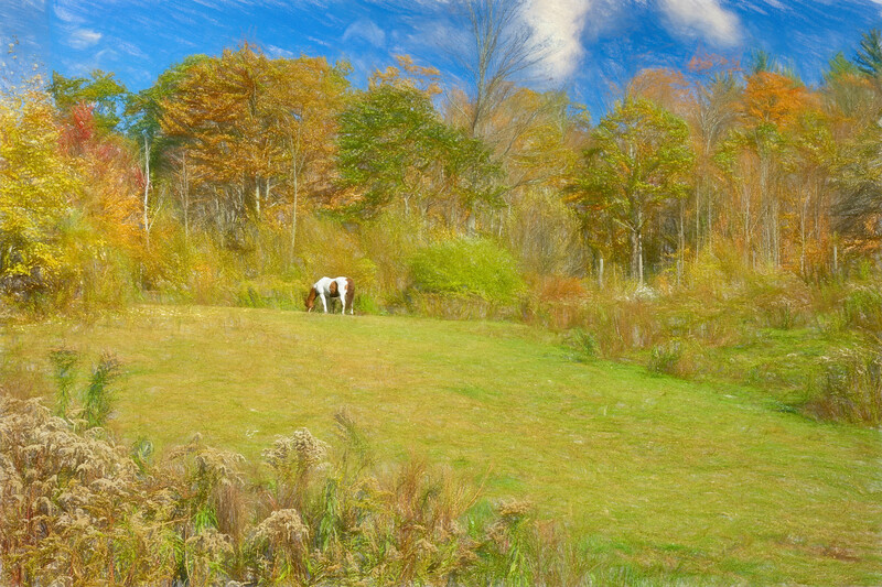 A lone horse in a rugged pasture.