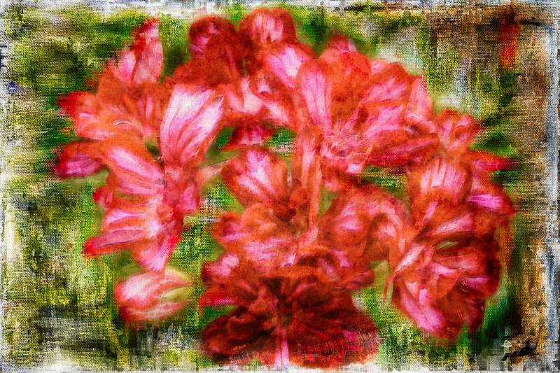 Group of Red Flowers