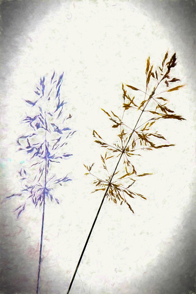Single grass plant and shadow.