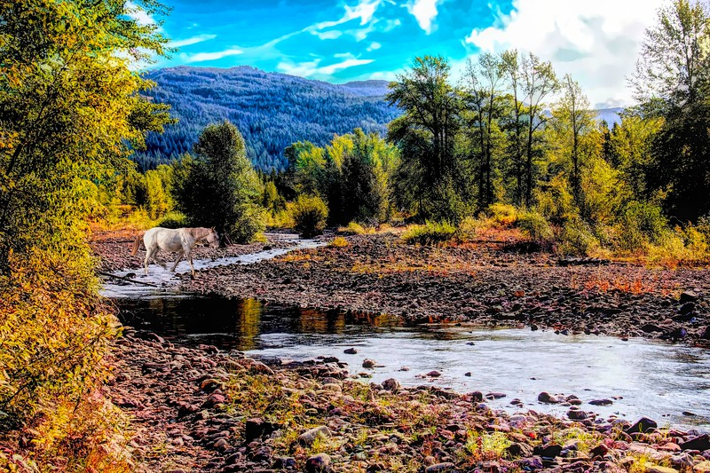 Horse crossing Bear Creek,Bear Creek Guest Ranch,Essex Montana