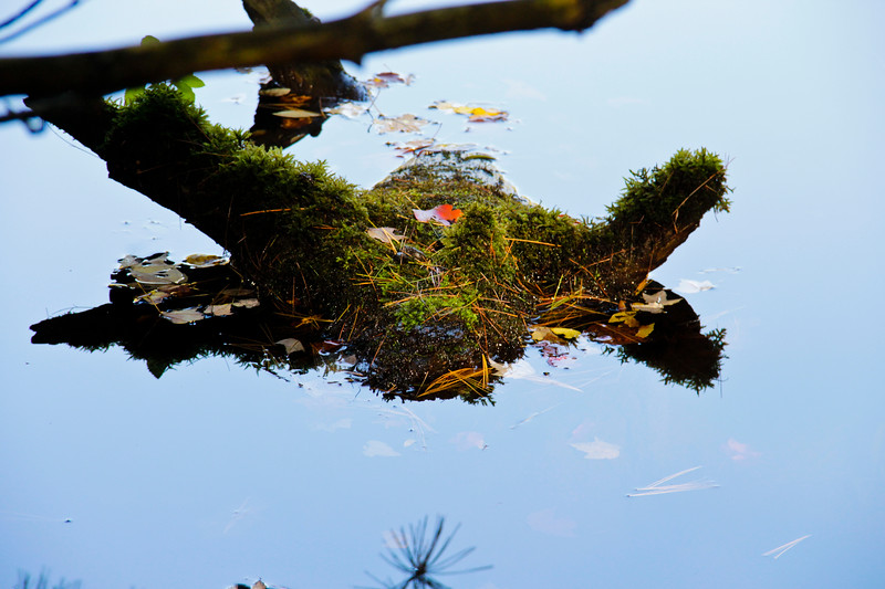 A horozontal stock photograph of a moss covered stump in the water with fall leaves. Pine needle reflection in foreground.