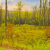 A landscape that is recovering from fire at one time. Vibrant vegetation is everywhere.