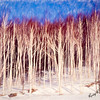 a stand of white birch trees in winter.