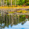 A Fall scenic showing the reflection of the forest in the water. A beaver lodge showing in the foreground