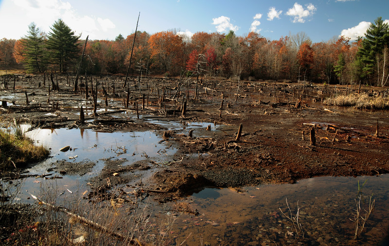 A horizontal stock photograph of a dead area caused by acid mine drainage.