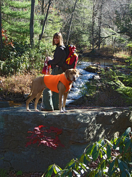 A vertical stock photo of of a young lady and her dog standing on a large rock looking back at the camera, a beautiful fall day in central Pennsylvania.