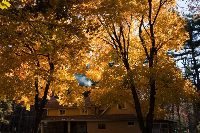A horizontal stock photograph showing blue sky, backlit yellow maple tree and a smoking chimney. Tomahawk Pines Camp Philipsburg Pa.