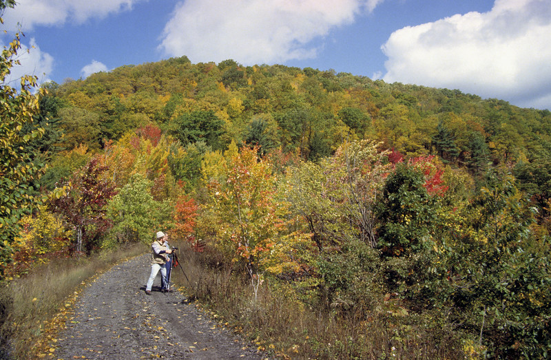A horizontal stock photograph  of two men photographing the Fall Foliage on a dirt road known as the Sandy Ridge trail in central Pennsylvania.