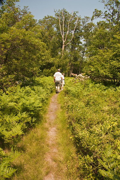 A vertical stock photograph of a man and women walking a trail veiwing the beautiful mountain laurel blooms. Central pennsylvania.